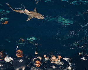 Certified Shark Dive Tour, 1 Night - Great Barrier Reef, Departing Cairns