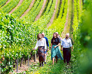 Wine Tour with Tastings, Full Day - Departs Hobart, Tasmania