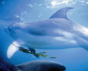 Swim With Dolphins and Seals - Mornington Peninsula, VIC - For 4