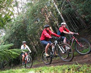 Mount Wellington Descent Cycling Tour, 2.5 Hours - Hobart