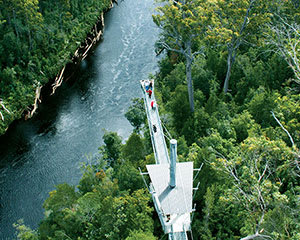 Tahune Adventures with Airwalk Admission - Hobart