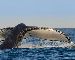 Whale Watching, Afternoon Cruise With Lunch - Sydney - For 2