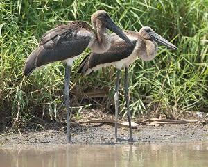 Wetland Wildlife Cruise, 1.5 Hours – Darwin