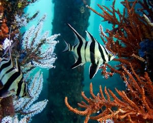 Intro Dive, 30 Minutes – Busselton Jetty