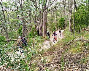 Mount Lofty Mountain Bike Descent Tour - Adelaide