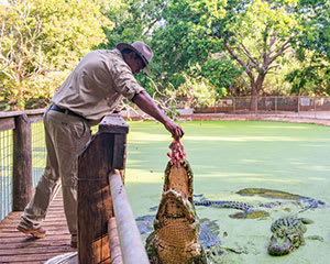 Crocodile Feeding Tour, 2.5 Hours - Broome