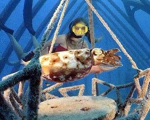 Museum of Underwater Art Snorkel Tour - Great Barrier Reef, Departs Townsville