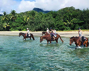 Horse Back Riding Tour, Afternoon - Cape Tribulation