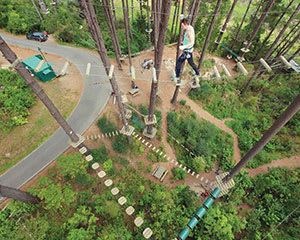Forest High Ropes and Ziplining Adventure - Tauranga