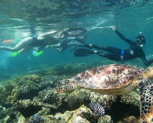 Overnight Great Barrier Reef Stay with Cruise & Snorkelling - Cairns