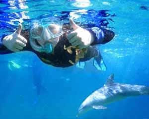 Swim with Wild Dolphins, 3 Hours - Bunbury, WA