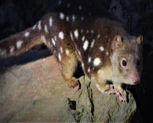 Nocturnal Tour at Softfoot Marsupial Sanctuary for up to 5 - Hindmarsh Valley