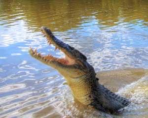 Jumping Crocs Adelaide River Cruise Tour, Half Day - Darwin
