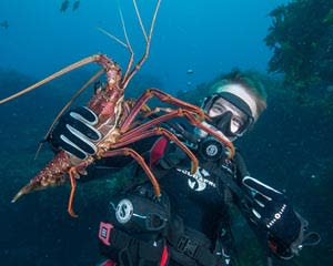 Rottnest Island Scuba Dive Cruise, Full Day - Departs Fremantle