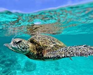 Quad Biking & Snorkelling Adventure, 2.5 Hours - Coral Bay