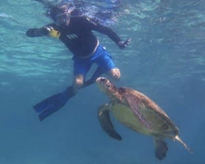 Ningaloo Reef Snorkel With Turtles Sailing Tour, 4 Hours - Coral Bay