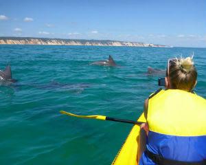 Wildlife Kayak Tour & 4WD Adventure, 3 Hours - Rainbow Beach