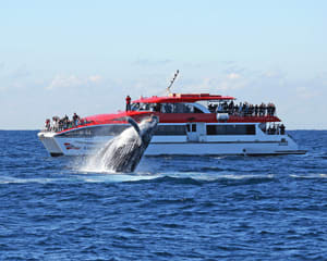 Whale Watching Cruise, 2.5 Hours - Darling Harbour, Sydney