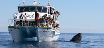 Family Fun with Dad Whale Watching