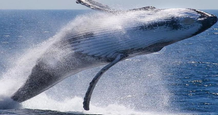 Whale Watching Cruise and Aquarium Experience - Perth