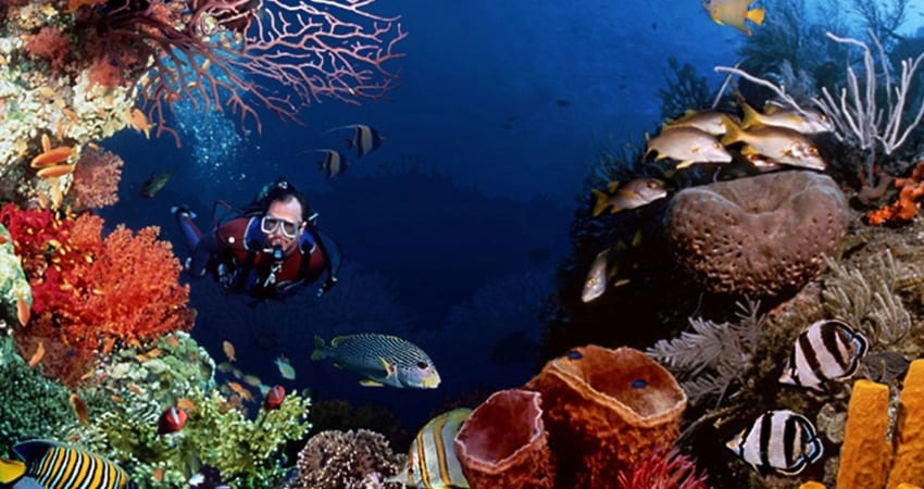 Certified Open Water Scuba Diving Course - Gold Coast