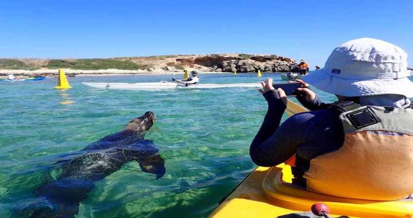 Sea Kayak Tour of Penguin & Seal Island - Perth