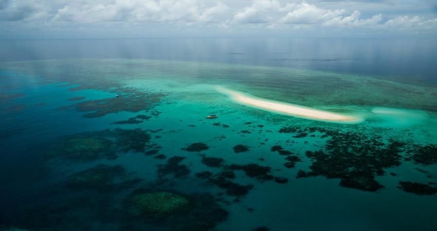 Great Barrier Reef Snorkelling Safari, Morning - Cape Tribulation