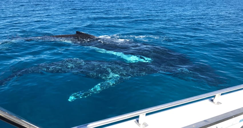 Whale Watching Cruise - Busselton, WA