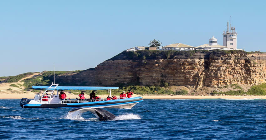 Whale Watching Cruise, 2 Hours - Newcastle