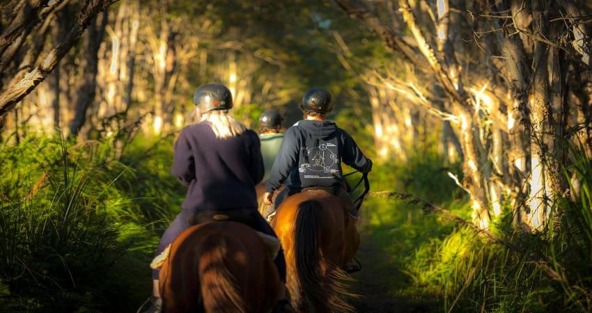 Horse Trail Ride, 60 Minutes - Byron Bay