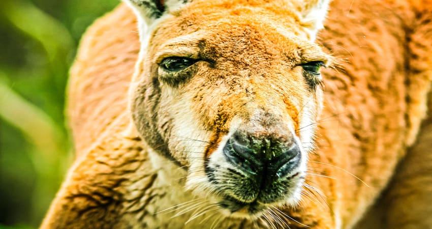 Outback Splash Entry and Koala Encounter - Perth