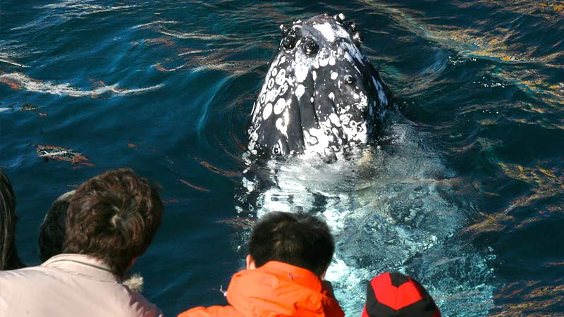 Whale Watching Cruise - Departs Darling Harbour, Sydney