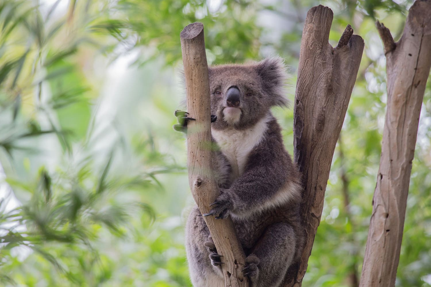 Guided Tour of Melbourne Zoo with Gift