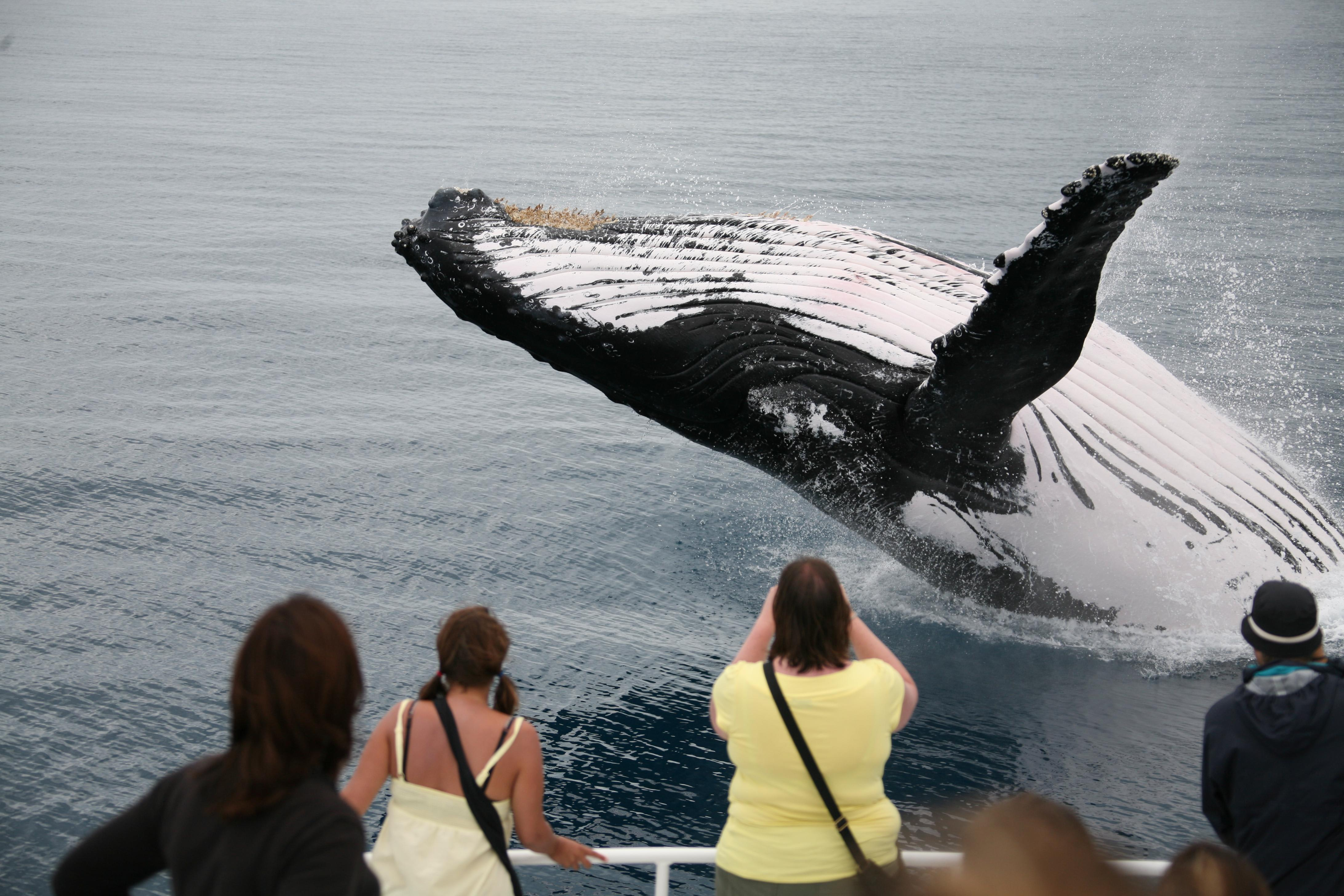 Fraser Island Whale Watching Cruise