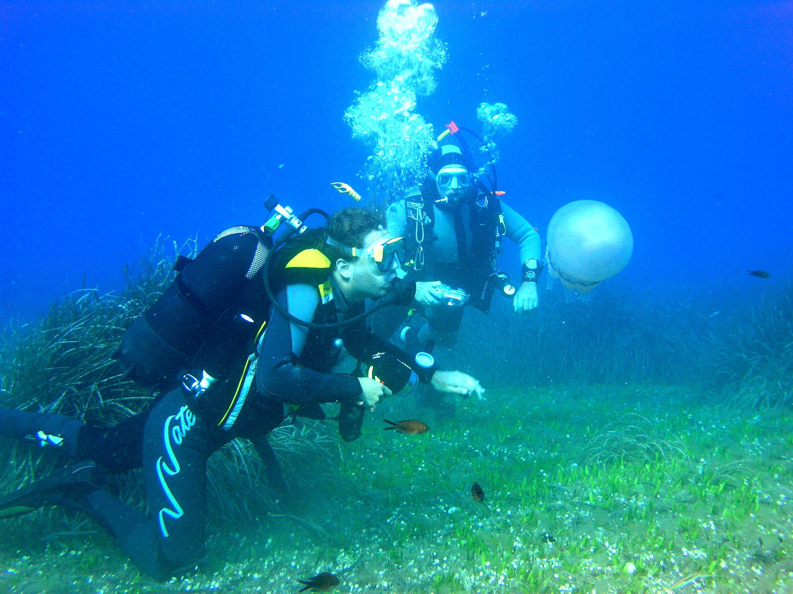 Introduction to Scuba Diving, Phillip Island - 3 Hours