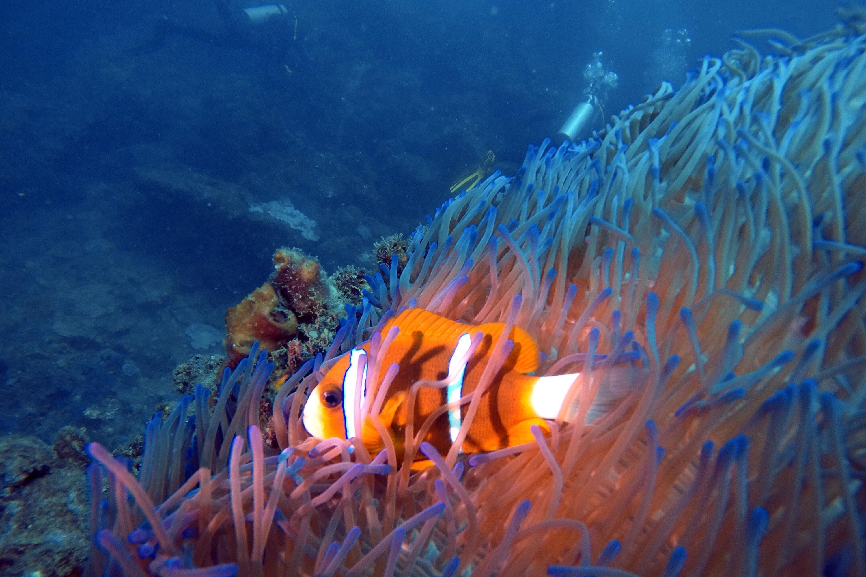 Ocean Dive with Sharks, 5 Hours - Sunshine Coast