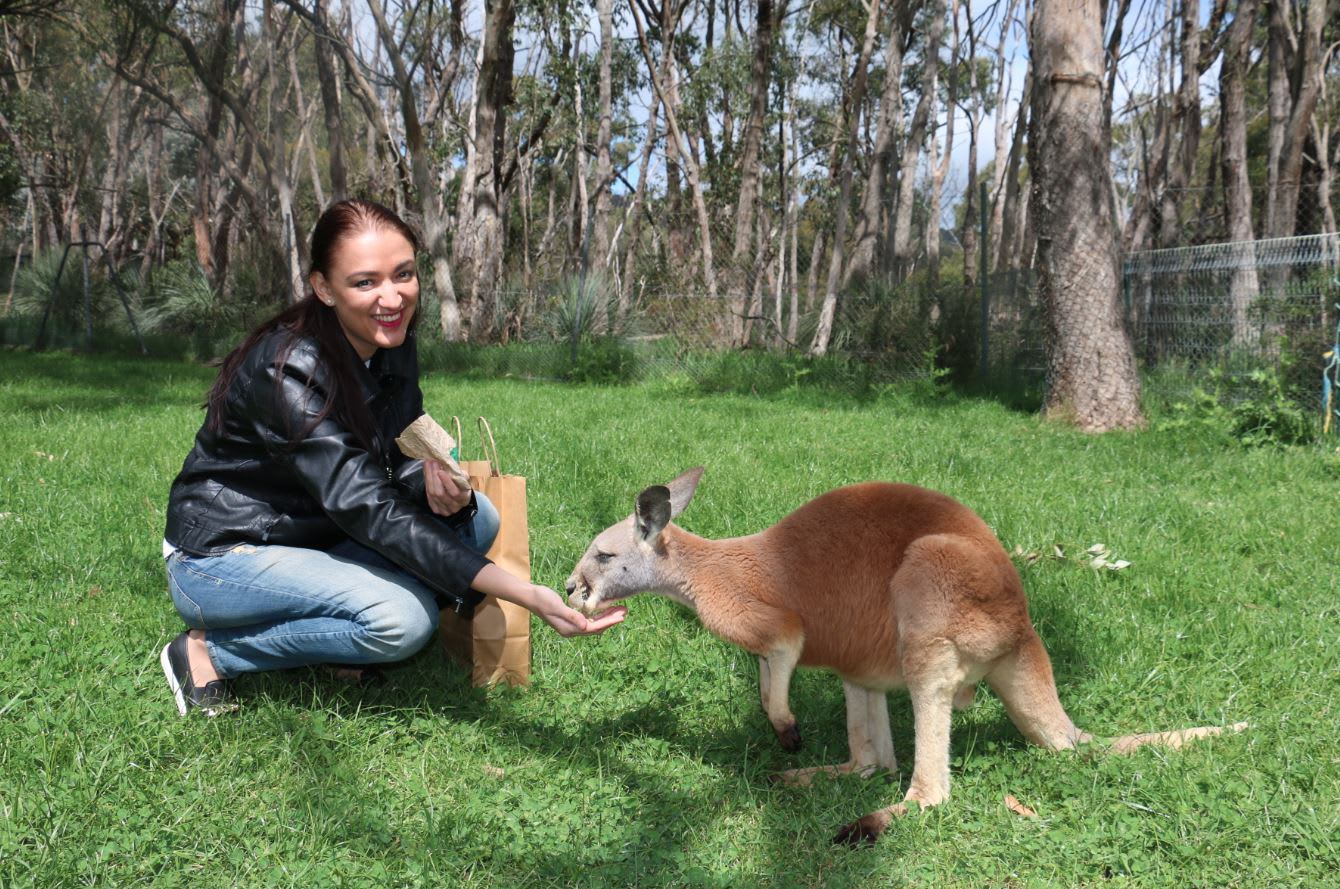 Cleland Wildlife Park Adventure Tour, Adelaide