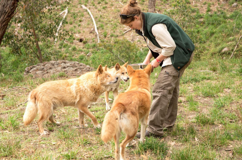 Cleland Wildlife Park Adventure Tour, Adelaide