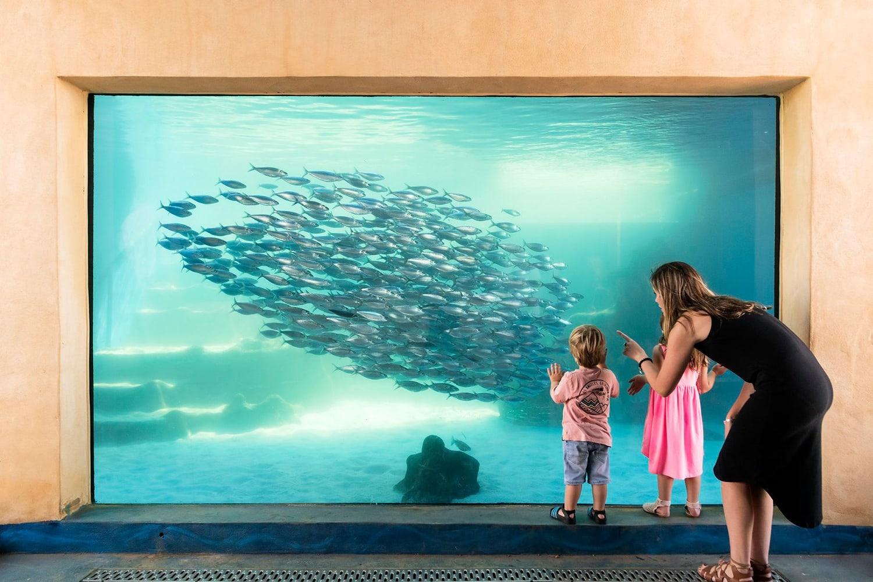 The Aquarium of Western Australia Entry