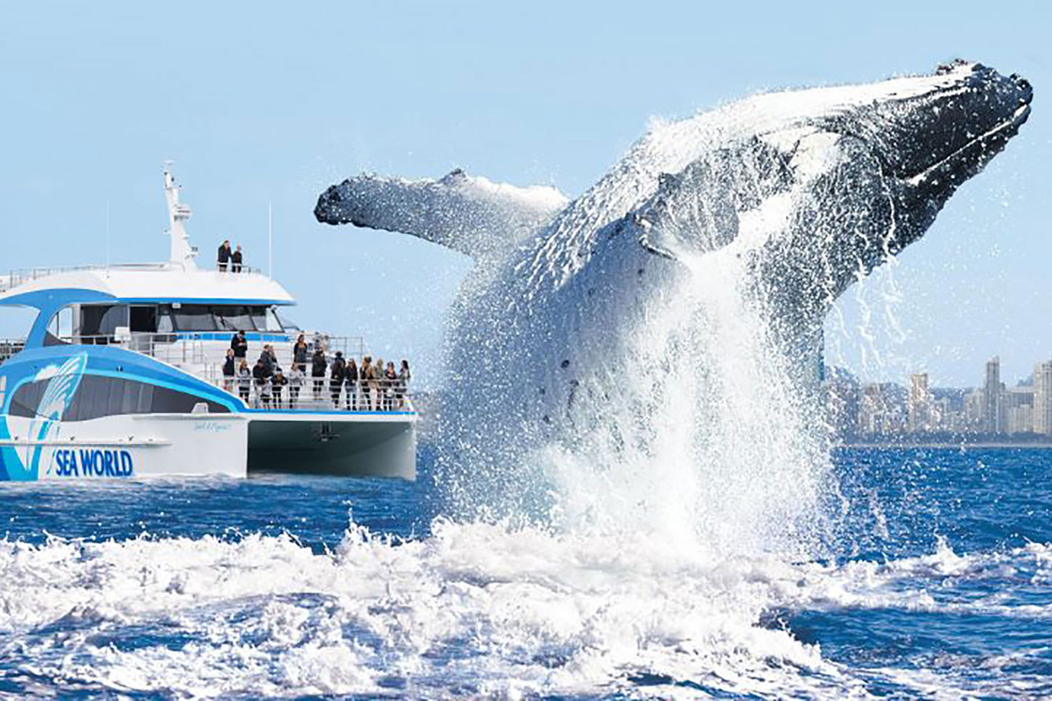 Whale Watching Cruise - Main Beach, Gold Coast