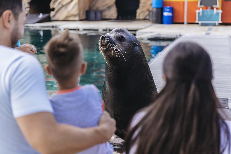 Sea World Seal Encounter - Surfers Paradise, Gold Coast