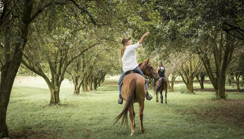 Horse Riding Tour - The Farm, Byron Bay