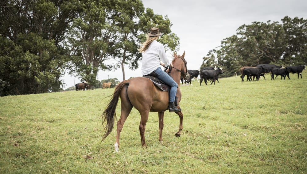 Horseback Riding Tour - The Farm, Byron Bay