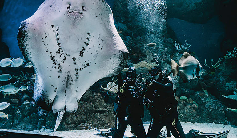 Dive with the Sharks Experience - Cairns Aquarium