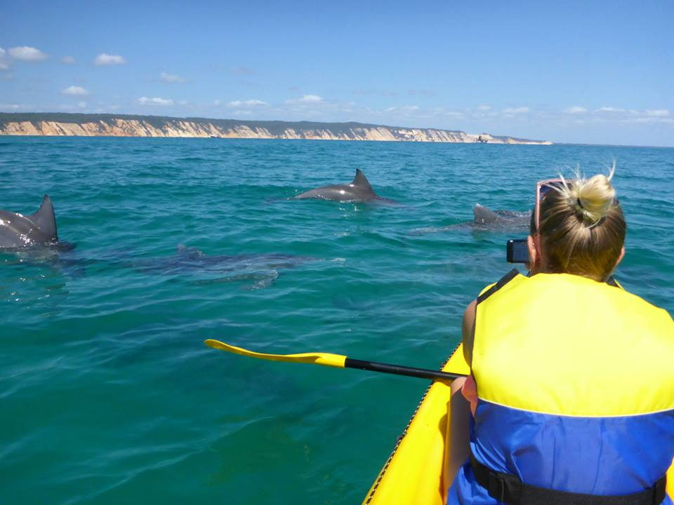 Rainbow Beach Wildlife Kayak Tour and 4WD Adventure - Half Day Tour