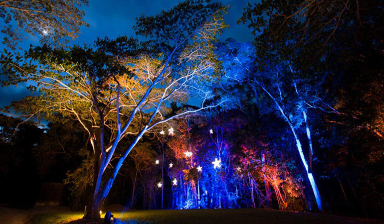 Flames of the Forest Rainforest Dining Experience with Wine - Departing Cairns