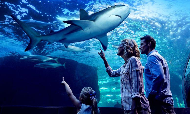 Aquarium by Night – Cairns