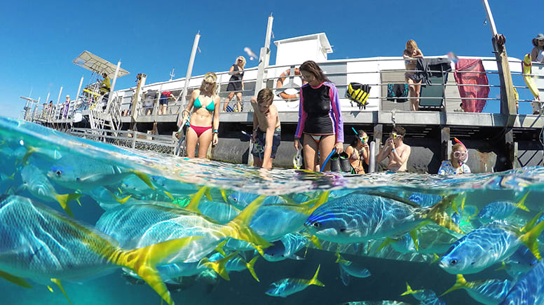Great Barrier Reef Cruise with Self-Guided Snorkelling, Full Day - Cairns