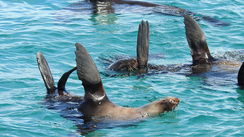 Seal and Dolphin Cruise, 90 Minutes - Port Phillip Bay, departing Queenscliff