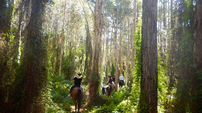 Horse Ride Through Farmland and Forest with Lunch - Gympie